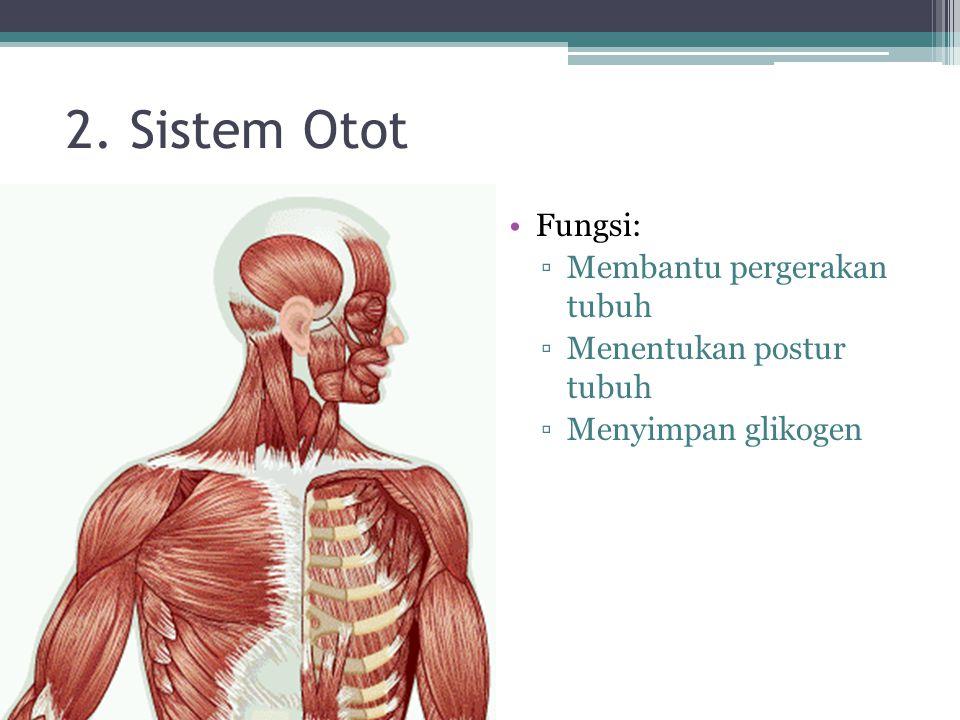 2. Sistem Otot Fungsi: ▫Membantu pergerakan tubuh ▫Menentukan postur tubuh ▫Menyimpan glikogen