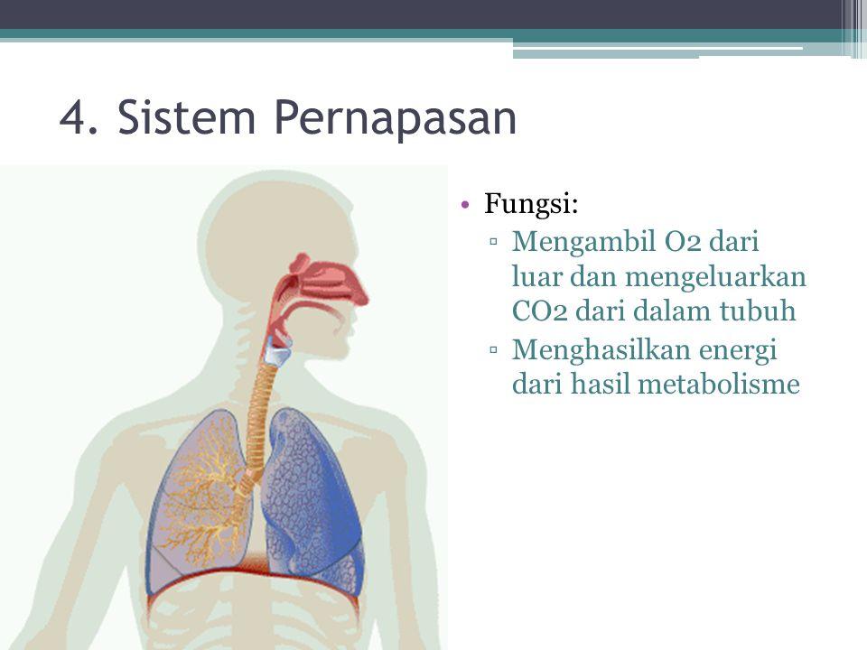 4. Sistem Pernapasan Fungsi: ▫Mengambil O2 dari luar dan mengeluarkan CO2 dari dalam tubuh ▫Menghasilkan energi dari hasil metabolisme