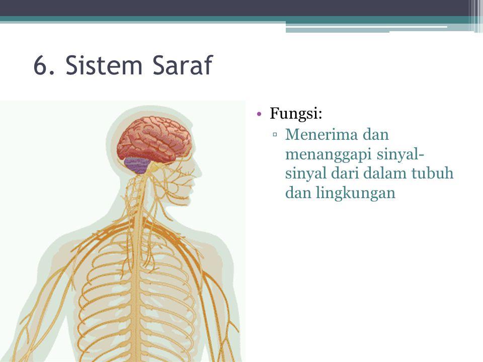 6. Sistem Saraf Fungsi: ▫Menerima dan menanggapi sinyal- sinyal dari dalam tubuh dan lingkungan