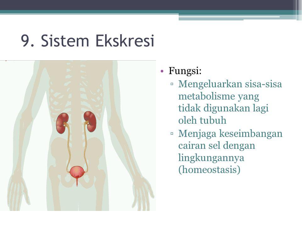 9. Sistem Ekskresi Fungsi: ▫Mengeluarkan sisa-sisa metabolisme yang tidak digunakan lagi oleh tubuh ▫Menjaga keseimbangan cairan sel dengan lingkungan