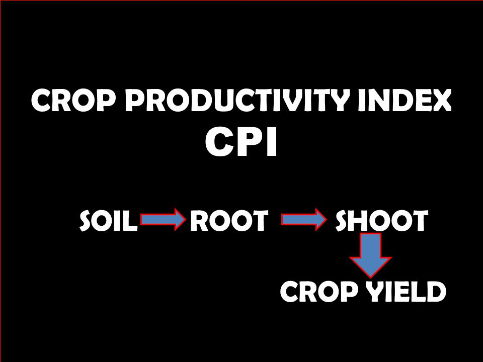 Better rooting = Greater yield potential In 3 weeks from planting there was over a 40% increase in root mass where Avail treated phosphate was used..