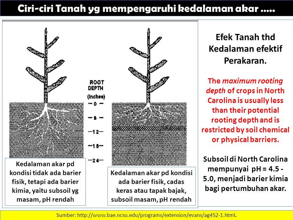 Ciri-ciri Tanah yg mempengaruhi kedalaman akar ….. Sumber: http://www.bae.ncsu.edu/programs/extension/evans/ag452-1.html. Efek Tanah thd Kedalaman efe