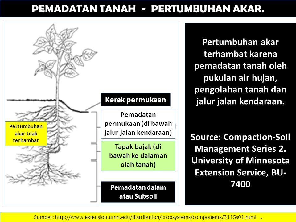 PEMADATAN TANAH - PERTUMBUHAN AKAR. Pertumbuhan akar terhambat karena pemadatan tanah oleh pukulan air hujan, pengolahan tanah dan jalur jalan kendara