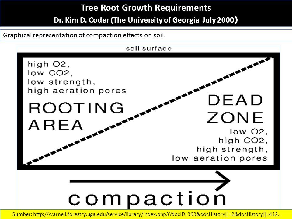 Tree Root Growth Requirements Dr. Kim D.