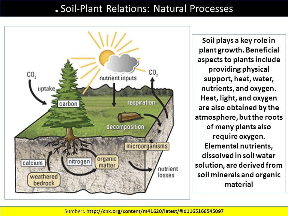 Soil-Plant Relations: Natural Processes Sumber:.