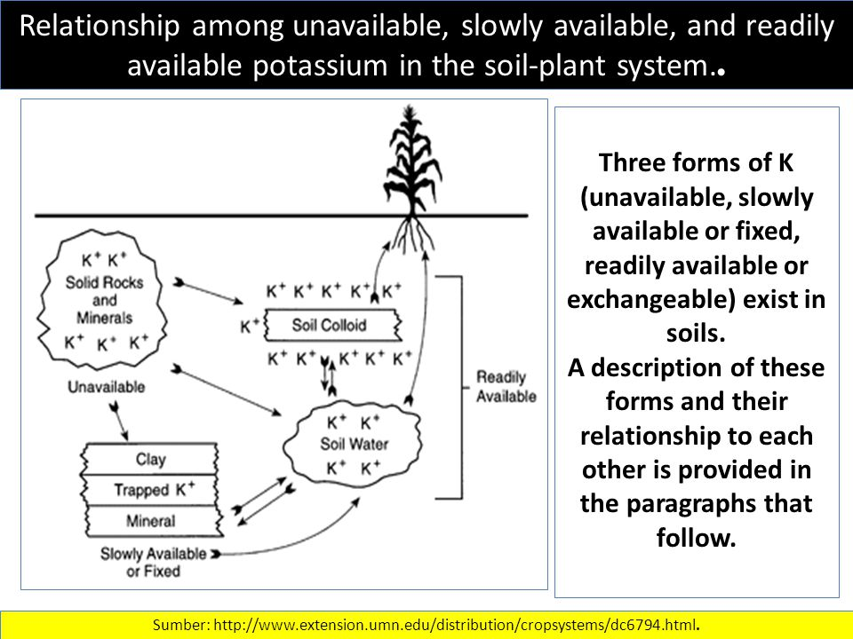Effect of Ca:H ratio in solution on relative root length in soybean (Sanzonowicz et al., 1998a)..
