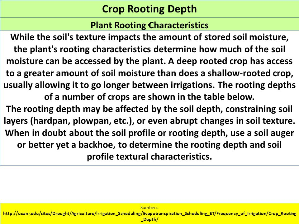 Crop Rooting Depth. Sumber:.