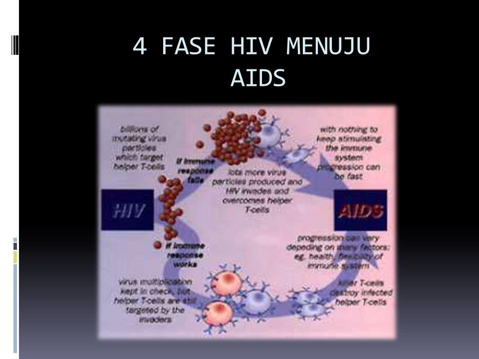 4 FASE HIV MENUJU AIDS