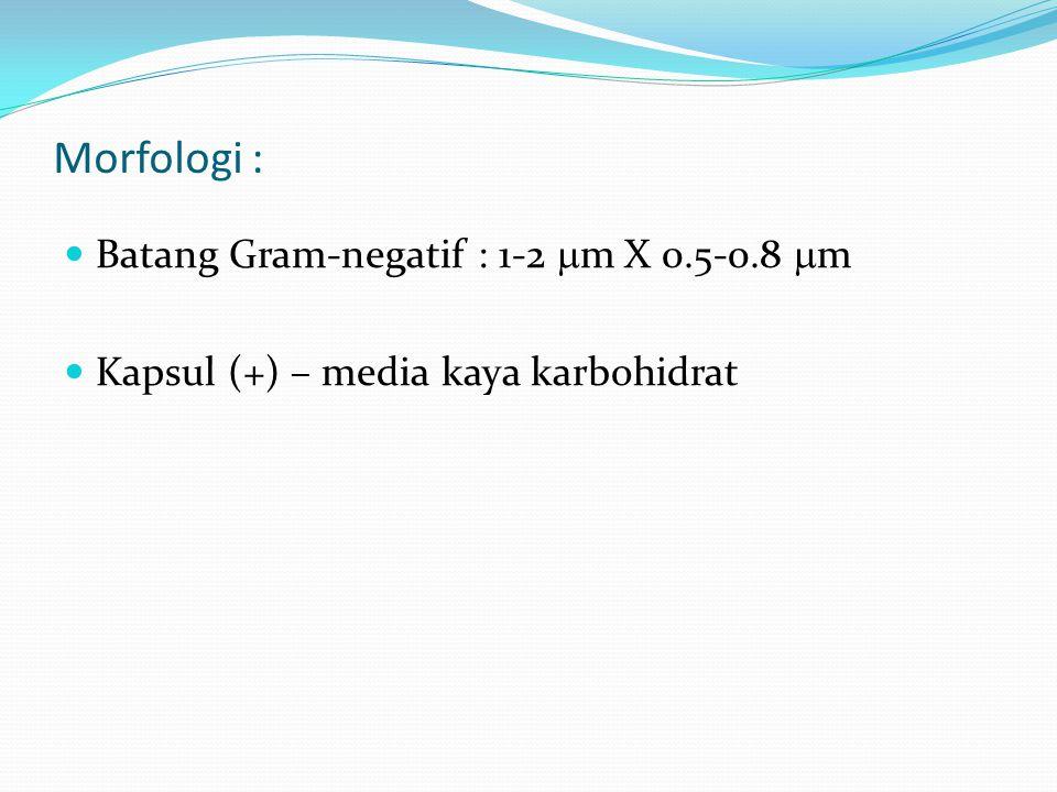 Morfologi : Batang Gram-negatif : 1-2  m X 0.5-0.8  m Kapsul (+) – media kaya karbohidrat