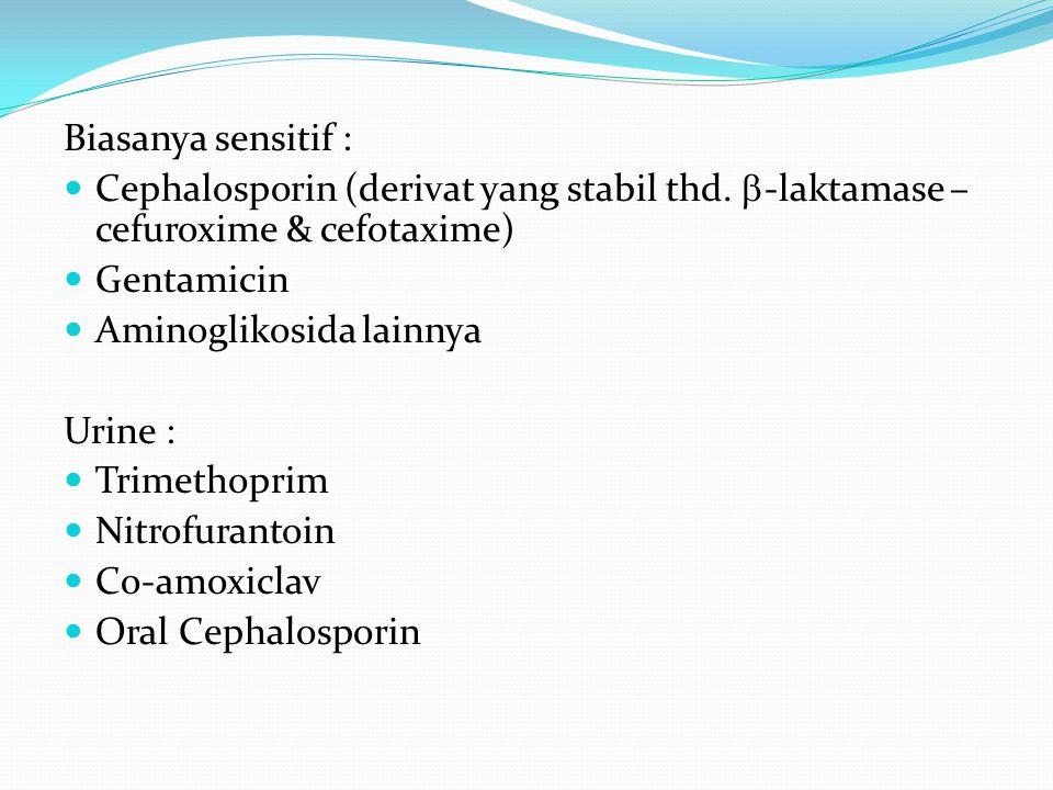 Biasanya sensitif : Cephalosporin (derivat yang stabil thd.  -laktamase – cefuroxime & cefotaxime) Gentamicin Aminoglikosida lainnya Urine : Trimetho