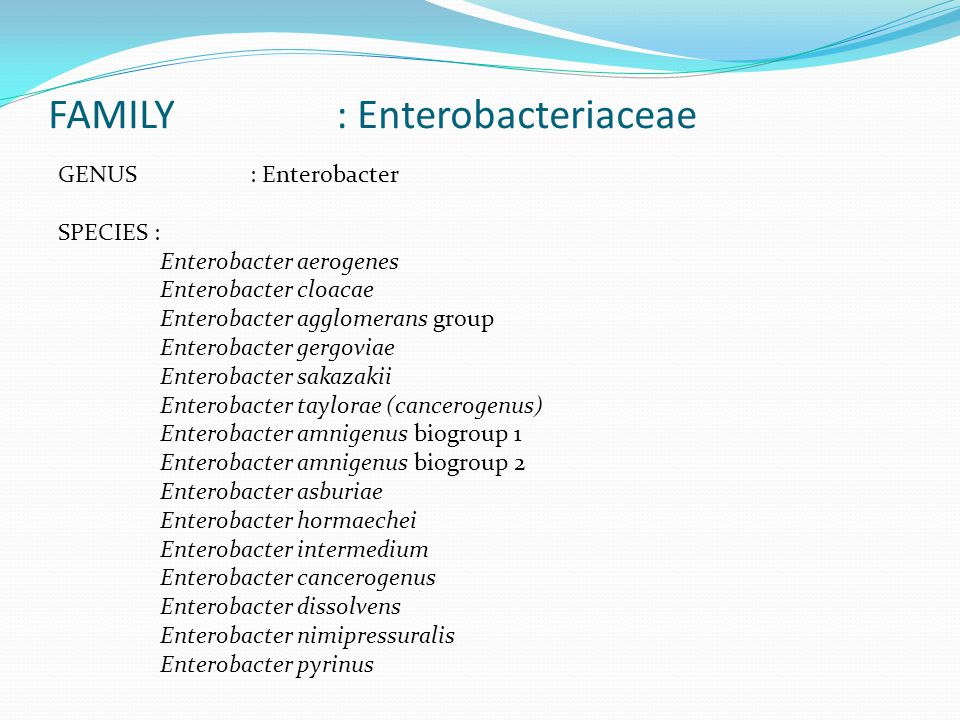 FAMILY : Enterobacteriaceae GENUS : Enterobacter SPECIES : Enterobacter aerogenes Enterobacter cloacae Enterobacter agglomerans group Enterobacter gergoviae Enterobacter sakazakii Enterobacter taylorae (cancerogenus) Enterobacter amnigenus biogroup 1 Enterobacter amnigenus biogroup 2 Enterobacter asburiae Enterobacter hormaechei Enterobacter intermedium Enterobacter cancerogenus Enterobacter dissolvens Enterobacter nimipressuralis Enterobacter pyrinus