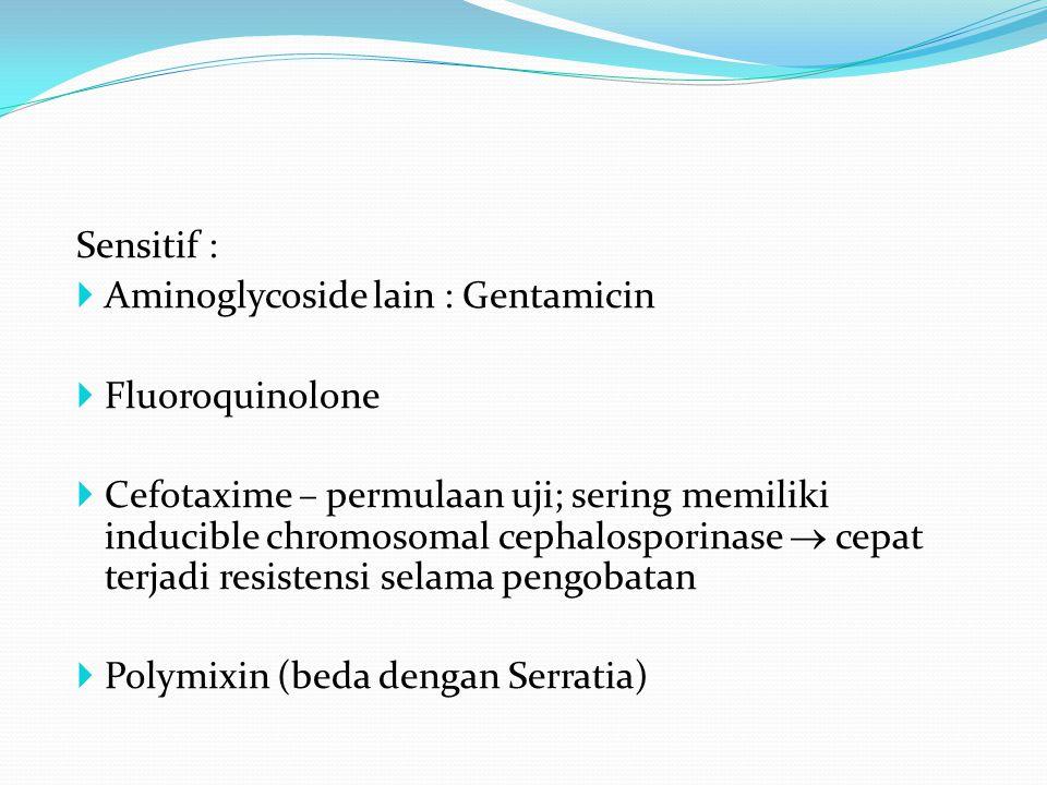 Sensitif :  Aminoglycoside lain : Gentamicin  Fluoroquinolone  Cefotaxime – permulaan uji; sering memiliki inducible chromosomal cephalosporinase  cepat terjadi resistensi selama pengobatan  Polymixin (beda dengan Serratia)