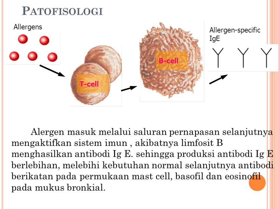 P ATOFISOLOGI Alergen masuk melalui saluran pernapasan selanjutnya mengaktifkan sistem imun, akibatnya limfosit B menghasilkan antibodi Ig E. sehingga