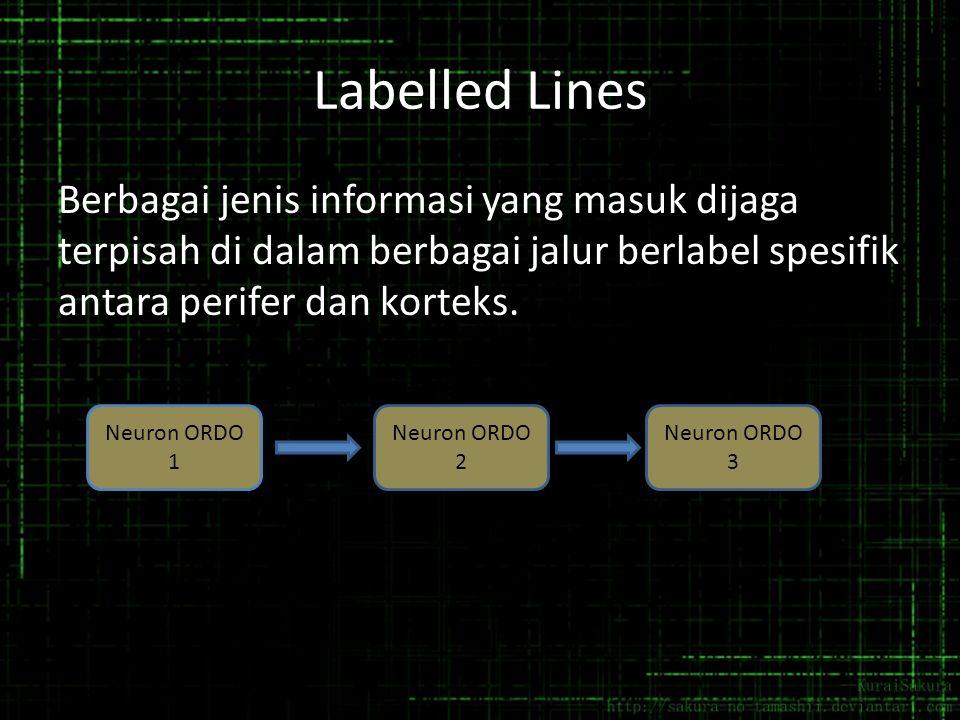 Labelled Lines Berbagai jenis informasi yang masuk dijaga terpisah di dalam berbagai jalur berlabel spesifik antara perifer dan korteks. Neuron ORDO 1