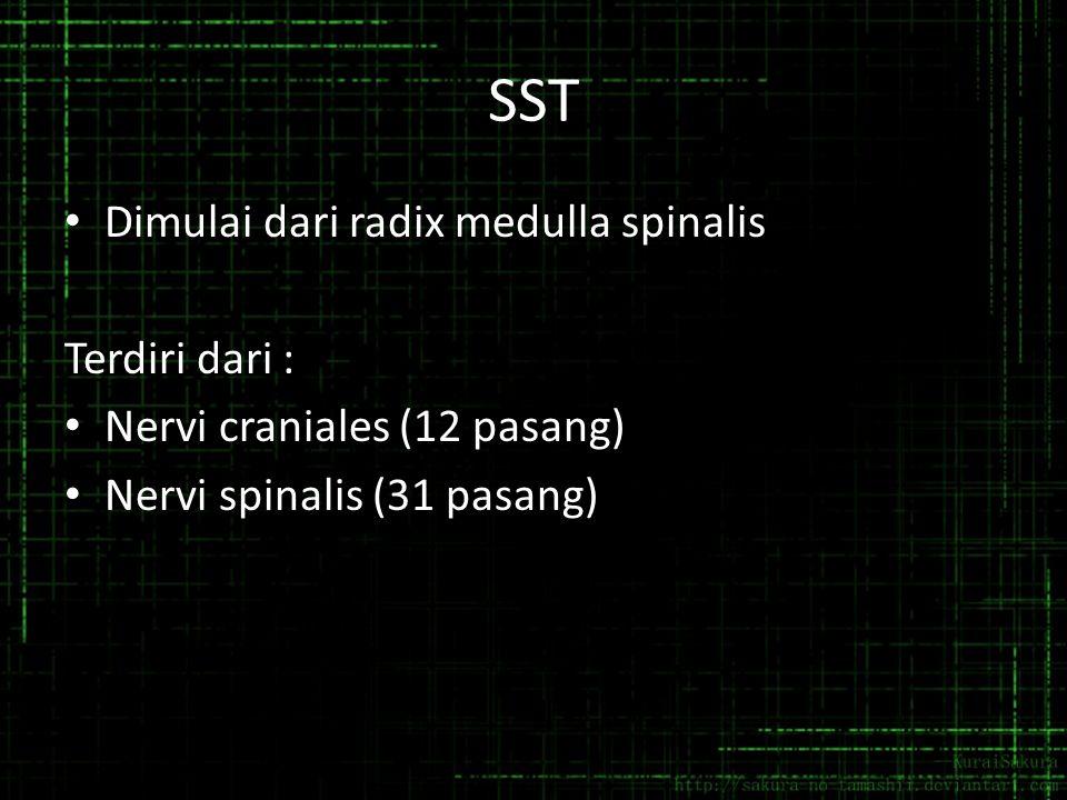 SST Dimulai dari radix medulla spinalis Terdiri dari : Nervi craniales (12 pasang) Nervi spinalis (31 pasang)