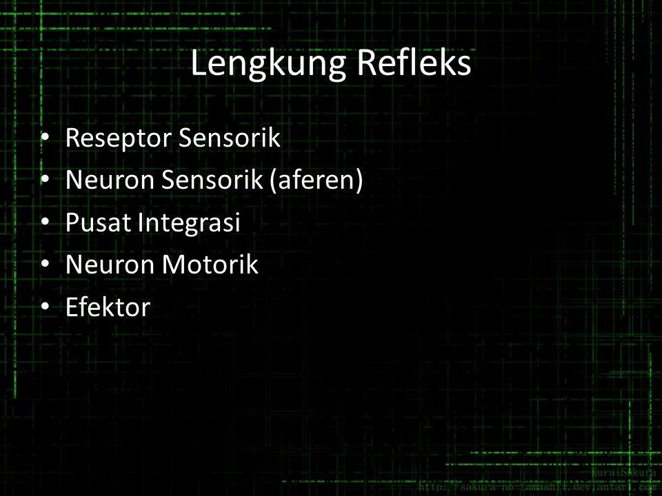Lengkung Refleks Reseptor Sensorik Neuron Sensorik (aferen) Pusat Integrasi Neuron Motorik Efektor