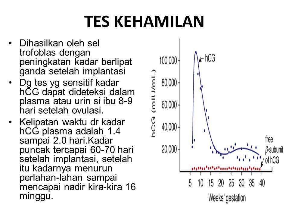 TES KEHAMILAN Dihasilkan oleh sel trofoblas dengan peningkatan kadar berlipat ganda setelah implantasi Dg tes yg sensitif kadar hCG dapat dideteksi da