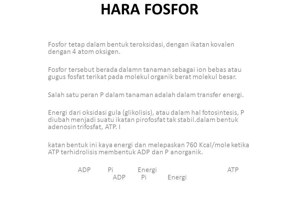 HARA FOSFOR Fosfor tetap dalam bentuk teroksidasi, dengan ikatan kovalen dengan 4 atom oksigen. Fosfor tersebut berada dalamn tanaman sebagai ion beba