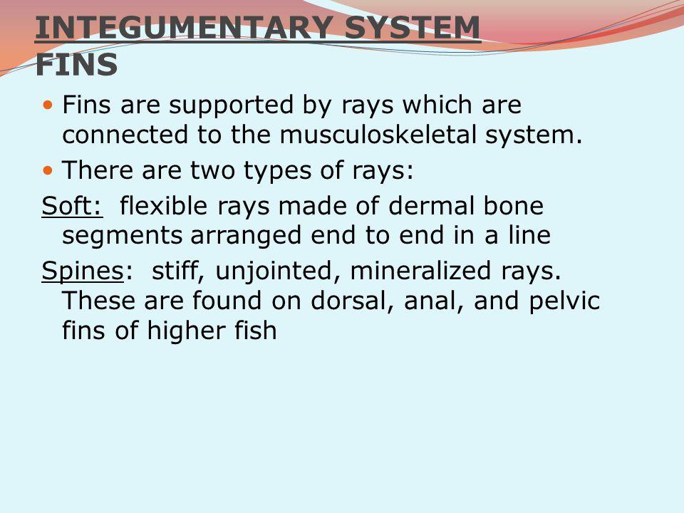 skin - mucous cells