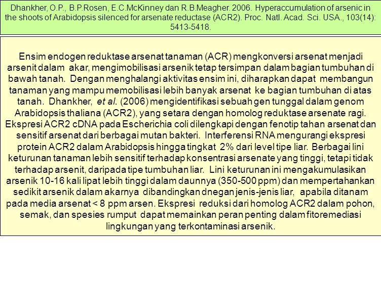 Ensim endogen reduktase arsenat tanaman (ACR) mengkonversi arsenat menjadi arsenit dalam akar, mengimobilisasi arsenik tetap tersimpan dalam bagian tu