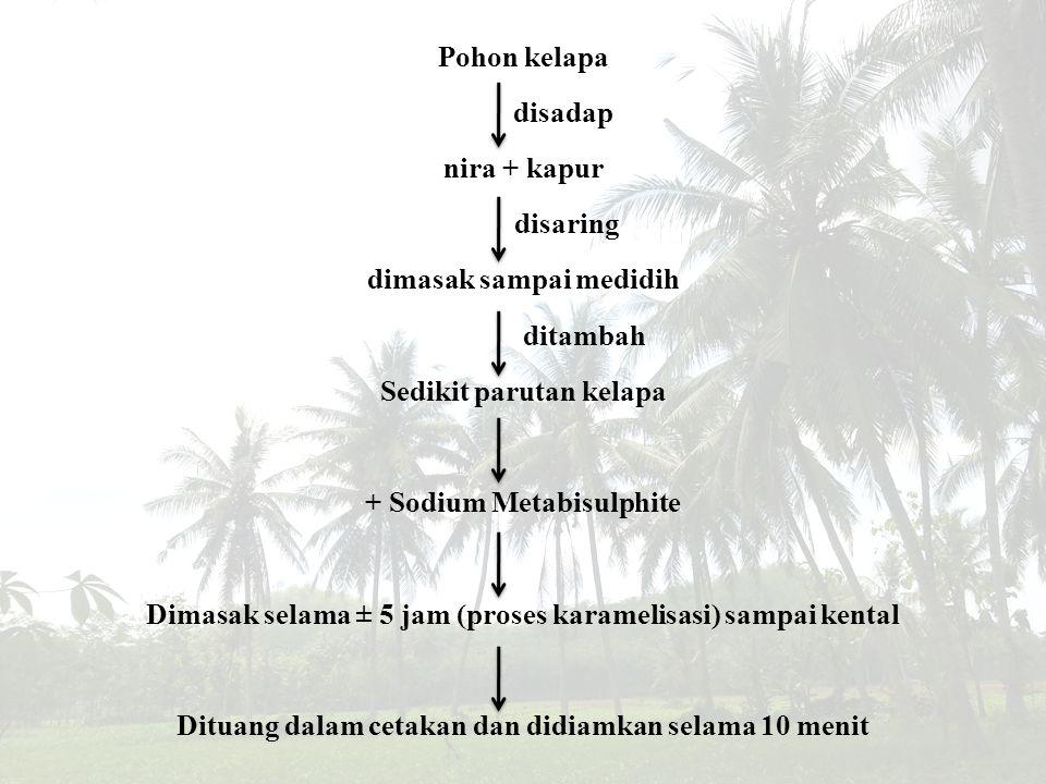 Pohon kelapa disadap nira + kapur disaring dimasak sampai medidih ditambah Sedikit parutan kelapa + Sodium Metabisulphite Dimasak selama ± 5 jam (pros