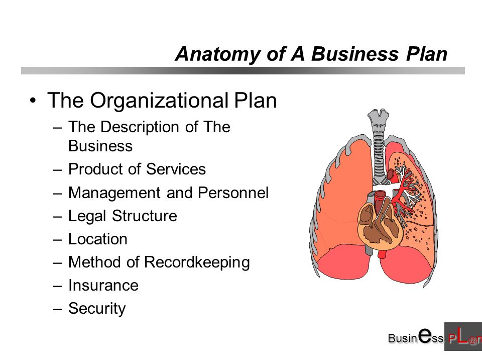 Busin e ss P L @ n Anatomy of A Business Plan The Organizational Plan –The Description of The Business –Product of Services –Management and Personnel