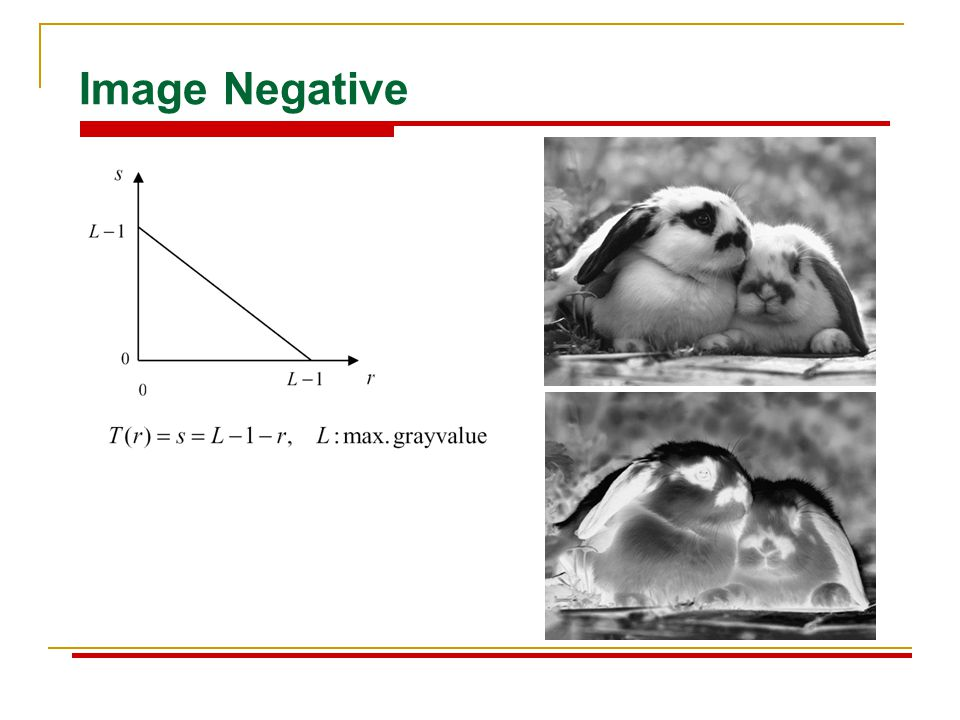 Image Negative
