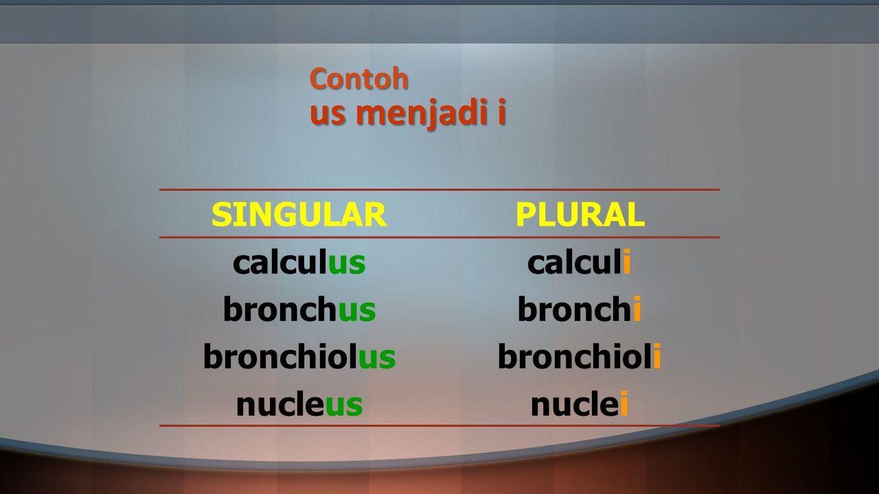 Contoh us menjadi i SINGULARPLURAL calculus bronchus bronchiolus nucleus calculi bronchi bronchioli nuclei