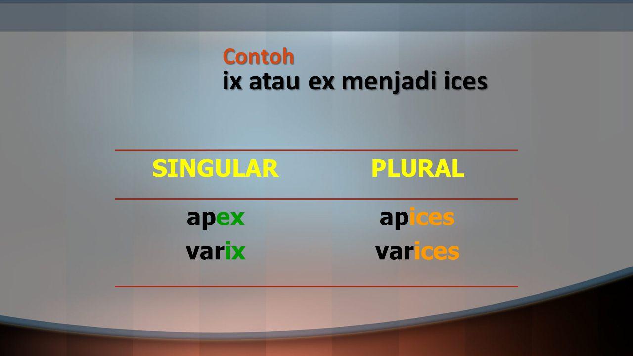 Contoh ix atau ex menjadi ices SINGULARPLURAL apex varix apices varices