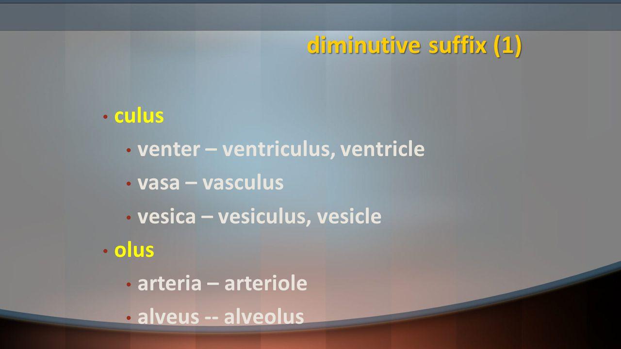 diminutive suffix (1) culus venter – ventriculus, ventricle vasa – vasculus vesica – vesiculus, vesicle olus arteria – arteriole alveus -- alveolus