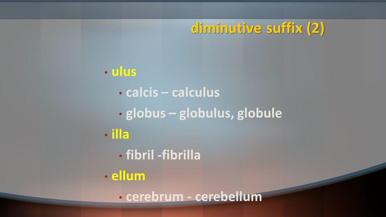 diminutive suffix (2) ulus calcis – calculus globus – globulus, globule illa fibril -fibrilla ellum cerebrum - cerebellum