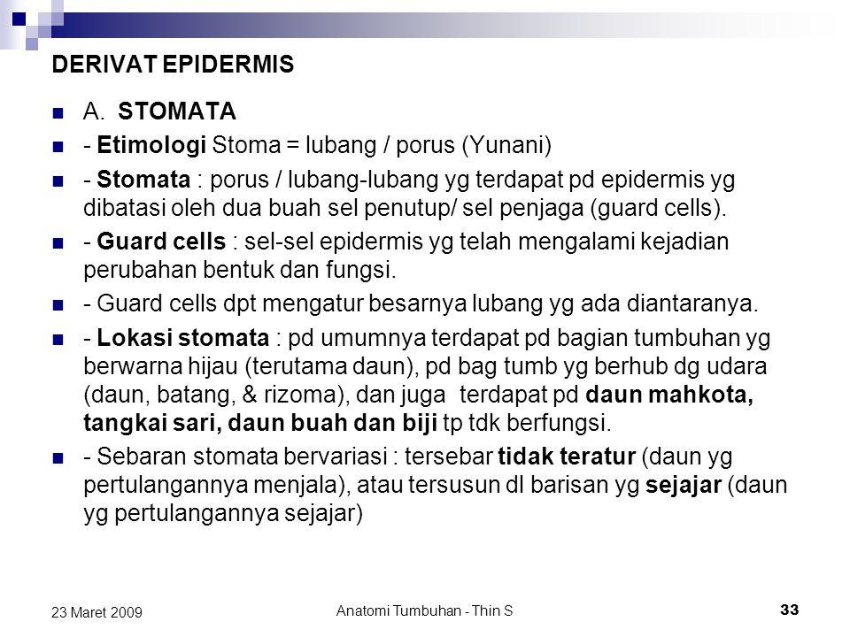 DERIVAT EPIDERMIS A. STOMATA - Etimologi Stoma = lubang / porus (Yunani) - Stomata : porus / lubang-lubang yg terdapat pd epidermis yg dibatasi oleh d