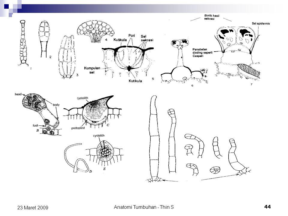 23 Maret 2009 Anatomi Tumbuhan - Thin S 44