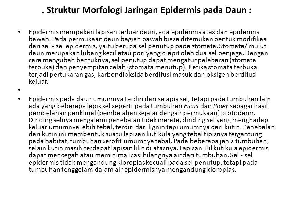 . Struktur Morfologi Jaringan Epidermis pada Daun : Epidermis merupakan lapisan terluar daun, ada epidermis atas dan epidermis bawah. Pada permukaan d