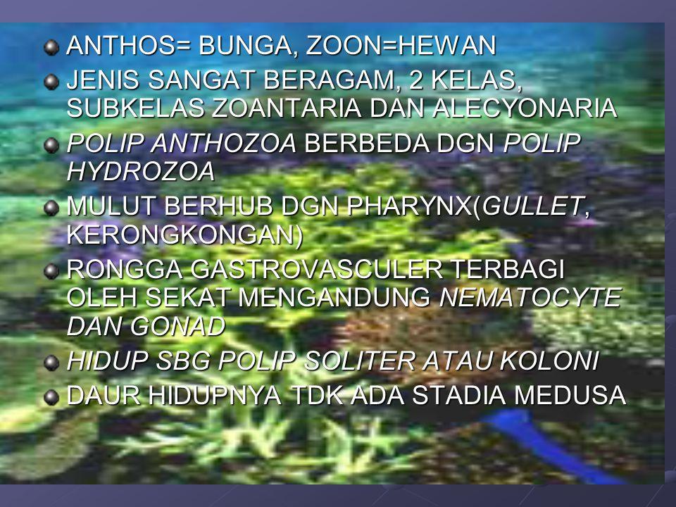 SUBKELAS ZOANTHARIA TDD 6 ORDO ADA YG BENTUK RANGKA KAPUR DAN ADA YG TIDAK STRUKTUR POLIP SEA ANEMON DPT DIPAKAI UTK MEMBERI GAMBARAN TTG POLIP ZOANTHARIA SEA ANEMON POLIP SOLITER, TINGGI ANTARA 1,5-5 CM, DIAMETER 1- 2CM,TERKECIL 4MM, TERBESAR 1 M.