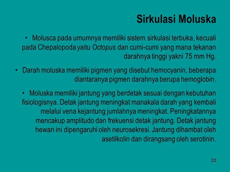 20 Sirkulasi Moluska Molusca pada umumnya memiliki sistem sirkulasi terbuka, kecuali pada Chepalopoda yaitu Octopus dan cumi-cumi yang mana tekanan da