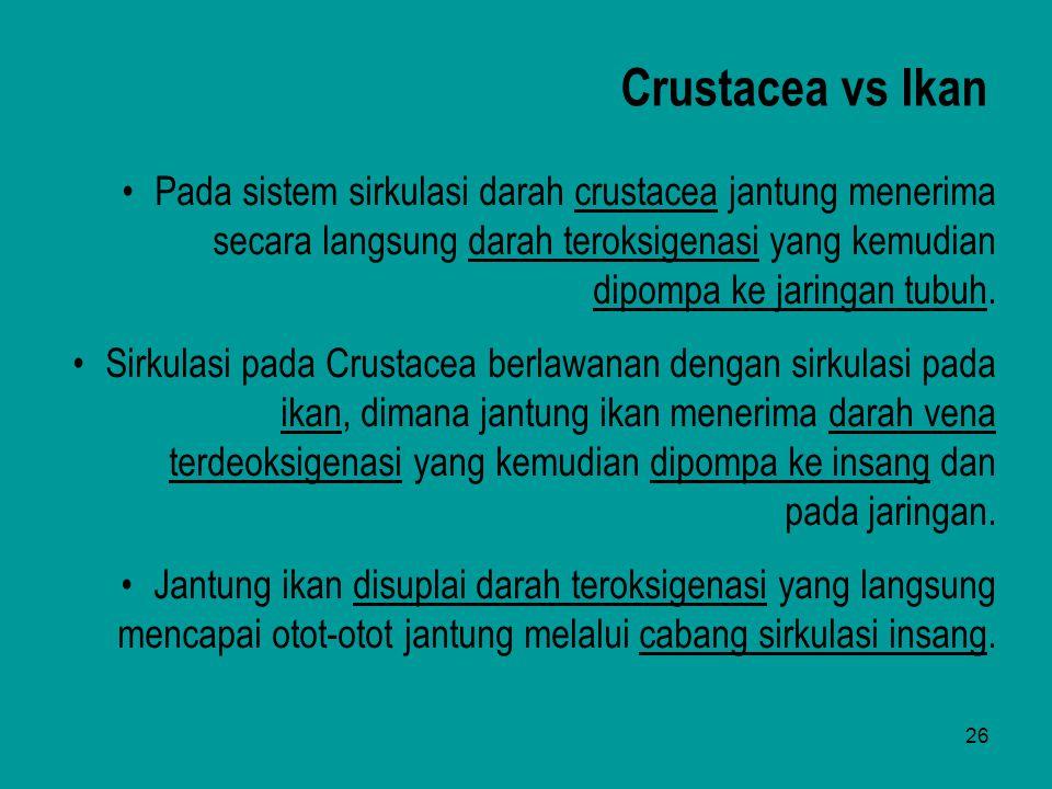 26 Pada sistem sirkulasi darah crustacea jantung menerima secara langsung darah teroksigenasi yang kemudian dipompa ke jaringan tubuh. Sirkulasi pada