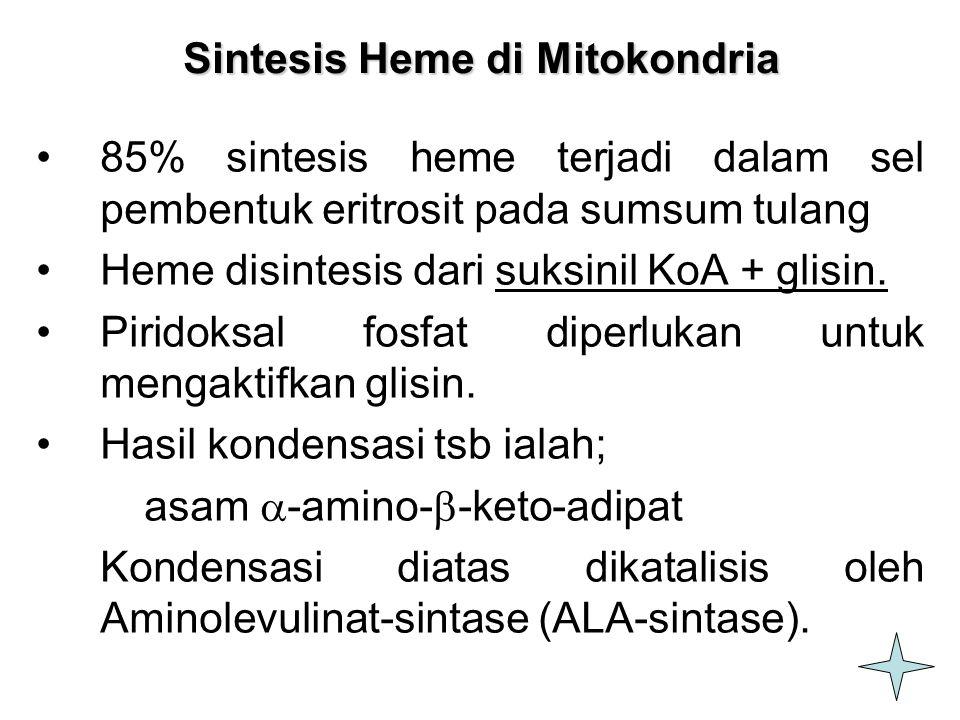5 Sintesis Heme di Mitokondria 85% sintesis heme terjadi dalam sel pembentuk eritrosit pada sumsum tulang Heme disintesis dari suksinil KoA + glisin.