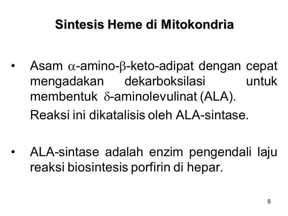 6 Sintesis Heme di Mitokondria Asam  -amino-  -keto-adipat dengan cepat mengadakan dekarboksilasi untuk membentuk  -aminolevulinat (ALA). Reaksi in