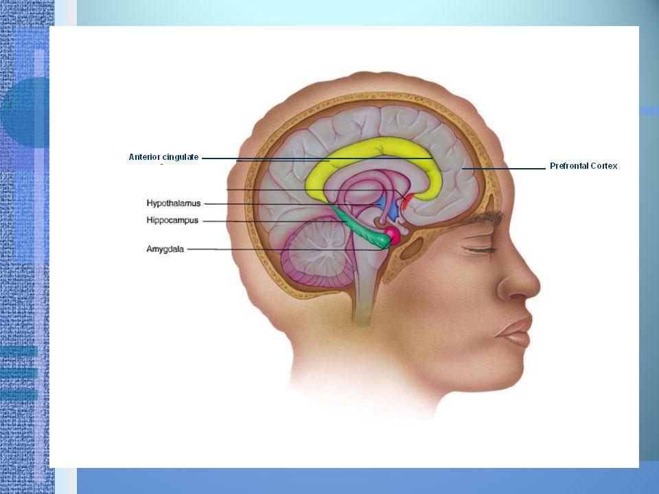 RE - EXPERINCE Terjadi pembanjiran dan ketidak seimbangan aliran neurotransmitter pada amigdala dan hipokampus  menyebabkan munculnya pikiran, bayangan ingatan yang berulang dan mengganggu dan dirasakan/seolah-olah kejadian itu terjadi kembali.