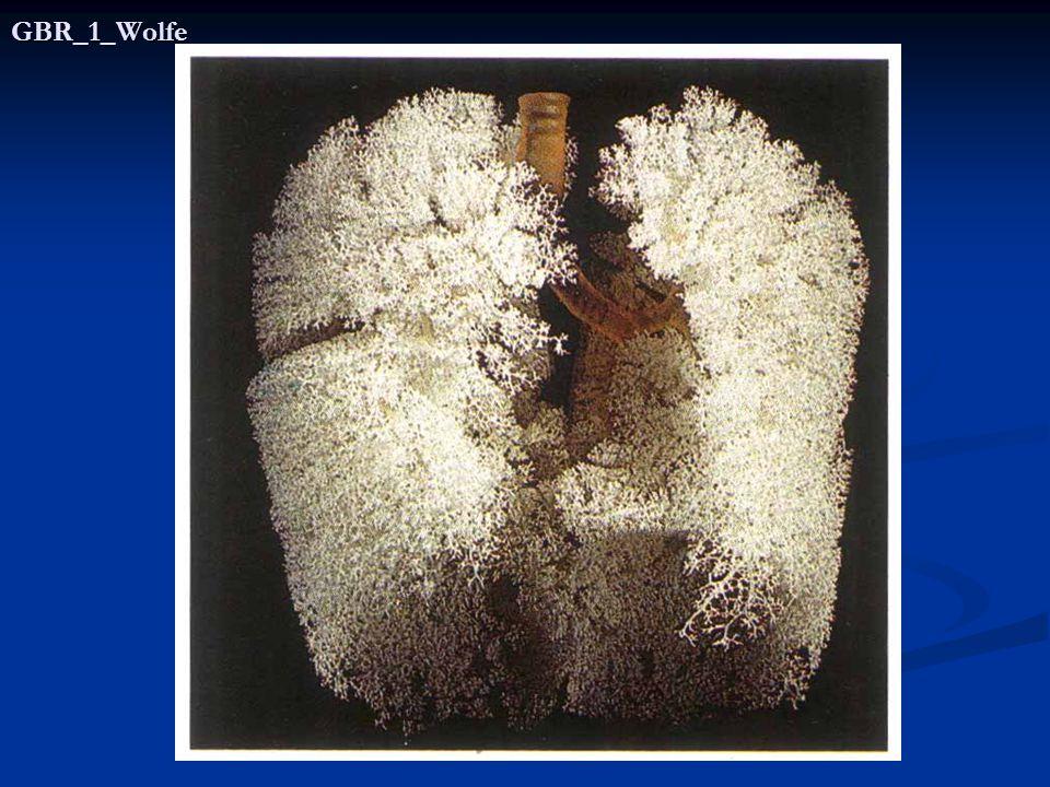 RESPIRASI NORMAL MERUPAKAN INTEGRASI AKTIFITAS DARI 5 KOMPONEN ORGAN YAITU : sistim saraf (berfungsi sebagai control) sistim saraf (berfungsi sebagai control) otot- otot pernafasan (fungsi pompa) otot- otot pernafasan (fungsi pompa) saluran nafas (fungsi ventilasi) saluran nafas (fungsi ventilasi) jaringan alveolar (fungsi pertukaran gas) jaringan alveolar (fungsi pertukaran gas) vaskuler paru dan diluar paru vaskuler paru dan diluar paru (transportasi gas).