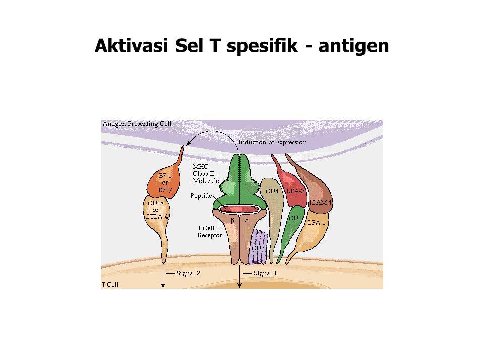 Aktivasi Sel T spesifik - antigen