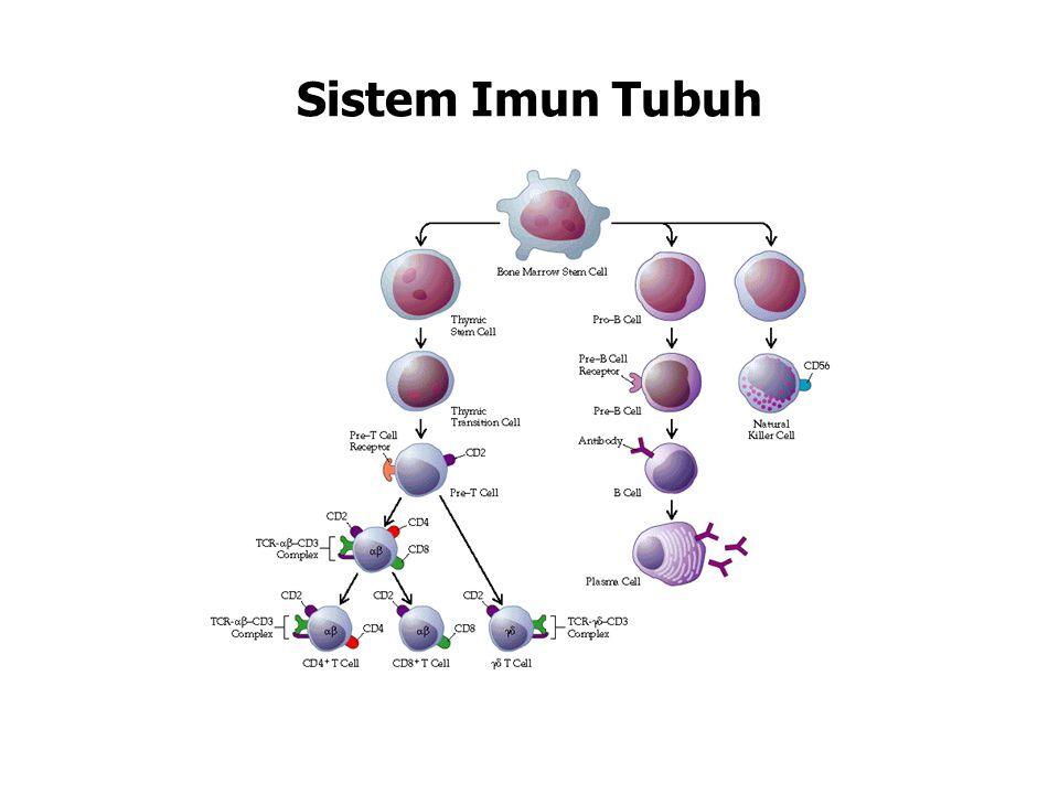 Sistem Imun Tubuh