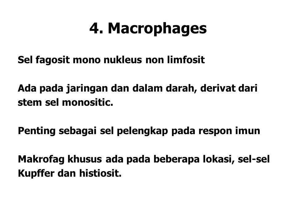 4. Macrophages Sel fagosit mono nukleus non limfosit Ada pada jaringan dan dalam darah, derivat dari stem sel monositic. Penting sebagai sel pelengkap