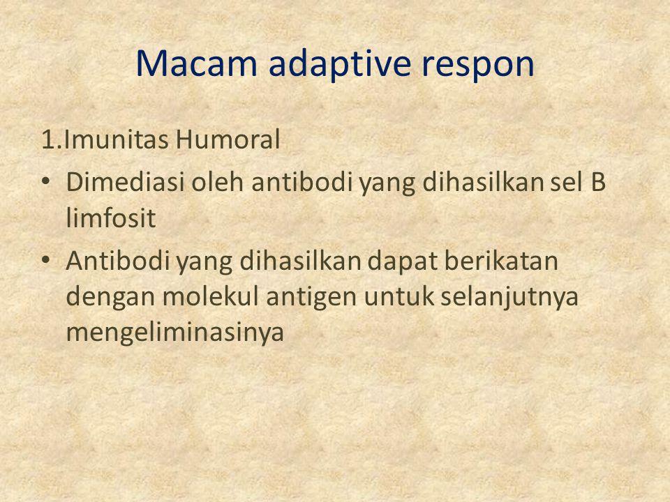 Macam adaptive respon 1.Imunitas Humoral Dimediasi oleh antibodi yang dihasilkan sel B limfosit Antibodi yang dihasilkan dapat berikatan dengan moleku