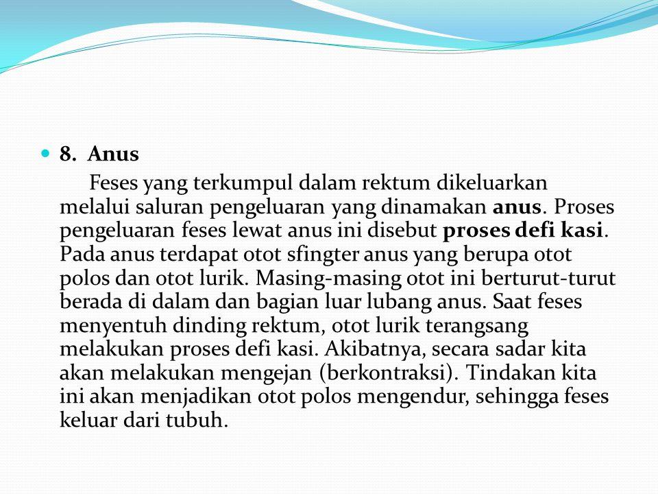 8. Anus Feses yang terkumpul dalam rektum dikeluarkan melalui saluran pengeluaran yang dinamakan anus. Proses pengeluaran feses lewat anus ini disebut