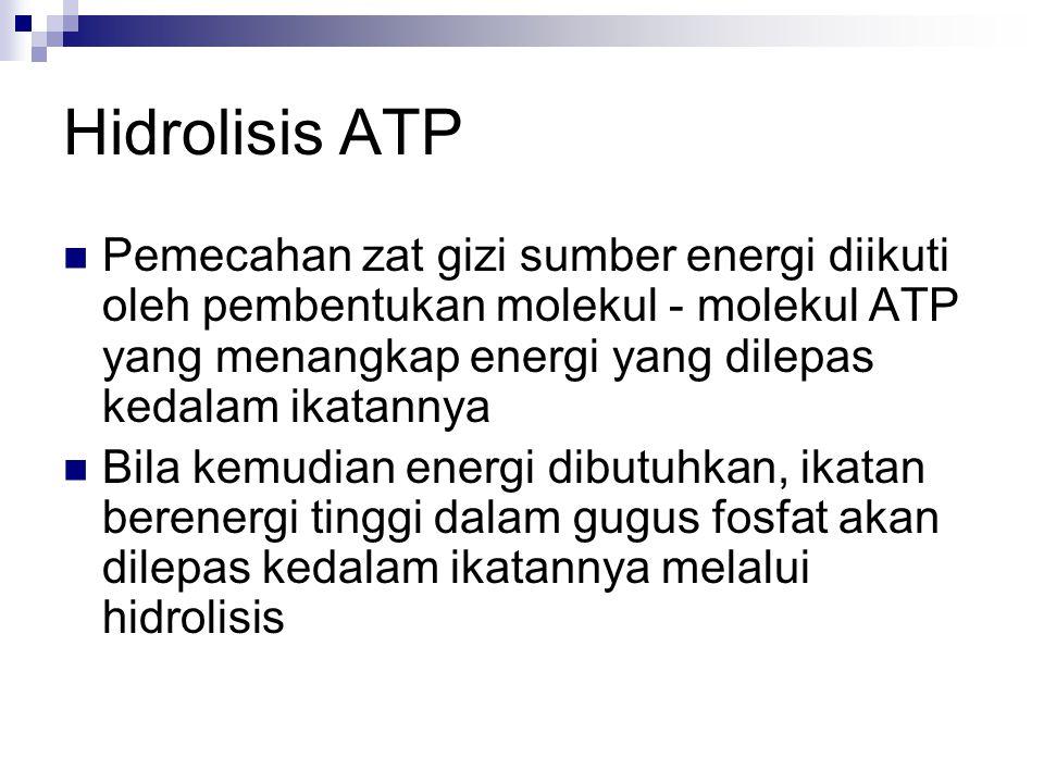 Hidrolisis ATP Pemecahan zat gizi sumber energi diikuti oleh pembentukan molekul - molekul ATP yang menangkap energi yang dilepas kedalam ikatannya Bila kemudian energi dibutuhkan, ikatan berenergi tinggi dalam gugus fosfat akan dilepas kedalam ikatannya melalui hidrolisis