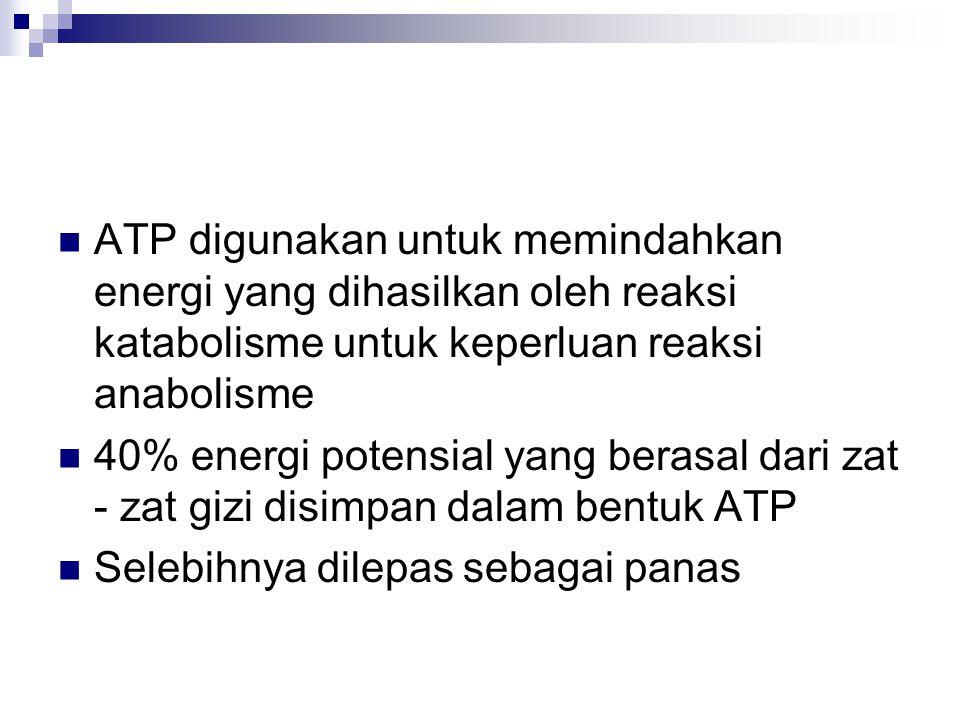 ATP digunakan untuk memindahkan energi yang dihasilkan oleh reaksi katabolisme untuk keperluan reaksi anabolisme 40% energi potensial yang berasal dari zat - zat gizi disimpan dalam bentuk ATP Selebihnya dilepas sebagai panas