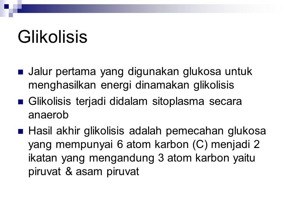Glikolisis Jalur pertama yang digunakan glukosa untuk menghasilkan energi dinamakan glikolisis Glikolisis terjadi didalam sitoplasma secara anaerob Hasil akhir glikolisis adalah pemecahan glukosa yang mempunyai 6 atom karbon (C) menjadi 2 ikatan yang mengandung 3 atom karbon yaitu piruvat & asam piruvat