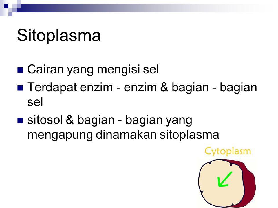 Sitoplasma Cairan yang mengisi sel Terdapat enzim - enzim & bagian - bagian sel sitosol & bagian - bagian yang mengapung dinamakan sitoplasma